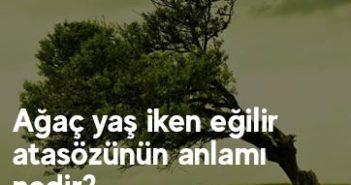 Ağaç yaş iken eğilir atasözünün anlamı nedir?