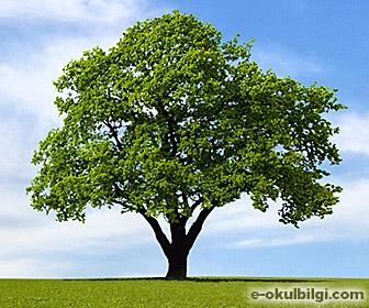 Ağaçların insanlığa faydaları nelerdir?