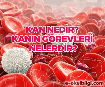 Kan nedir? Kanın vücuttaki görevleri nelerdir?