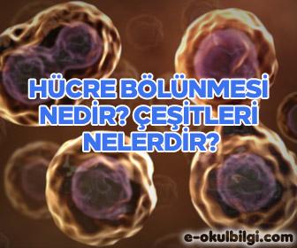 Hücre bölünmesi nedir? Çeşitleri nelerdir?