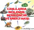 Canlılarda beslenme, besin zinciri ve enerji akışı